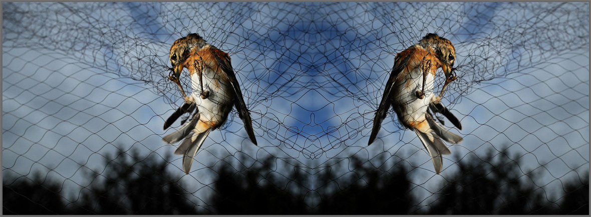Bird Net Manufacturers in Ahmedabad